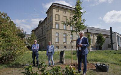 17-09-2020: Eichenpflanzung zu Ehren von Joseph Beuys am Hessischen Landesmuseum, Darmstadt